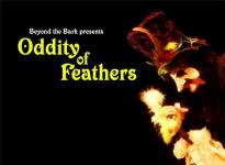 oddity of feathers